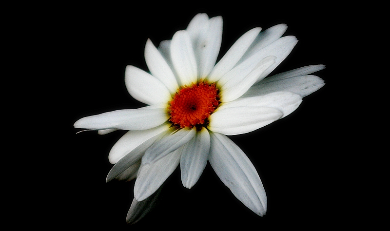 Daisy at night...