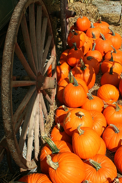 old wagon wheel and pumpkins