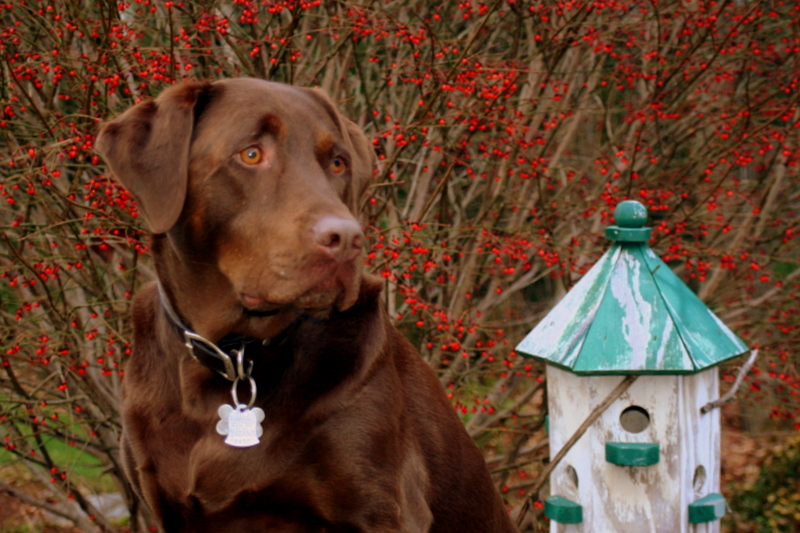 Sophie, a birdhouse and burning bush berries...