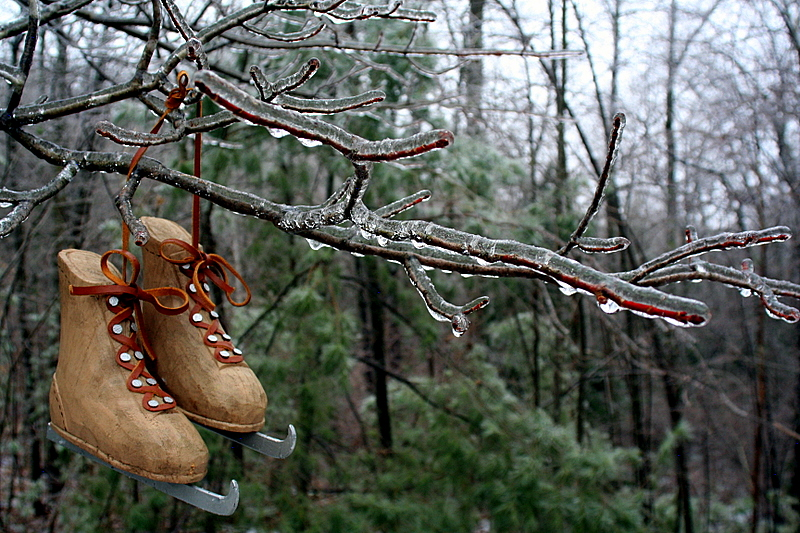 Wooden skates on an iced over tree branch