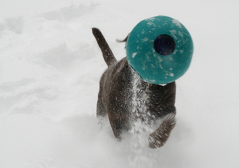 A jollyball headed snow beast...
