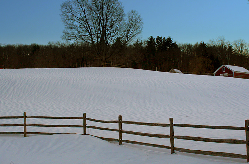 Snow covered wind-swept pasture...