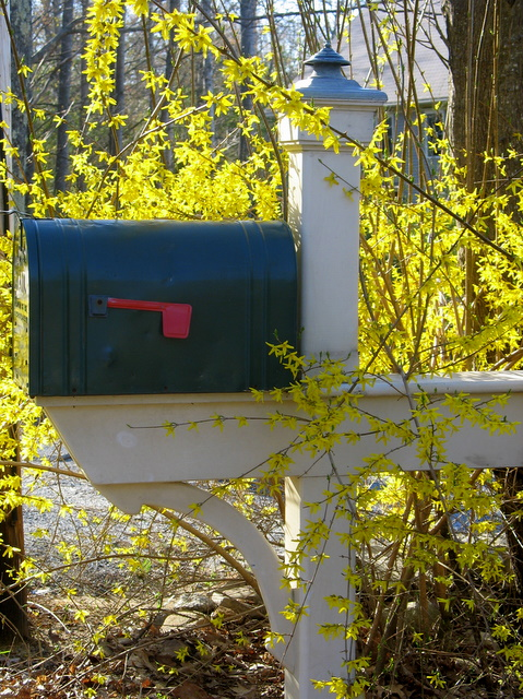 Spring even dresses up mailboxes...