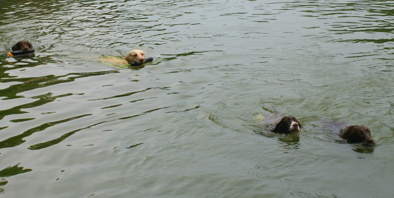 Dogs have fun at the lake too!