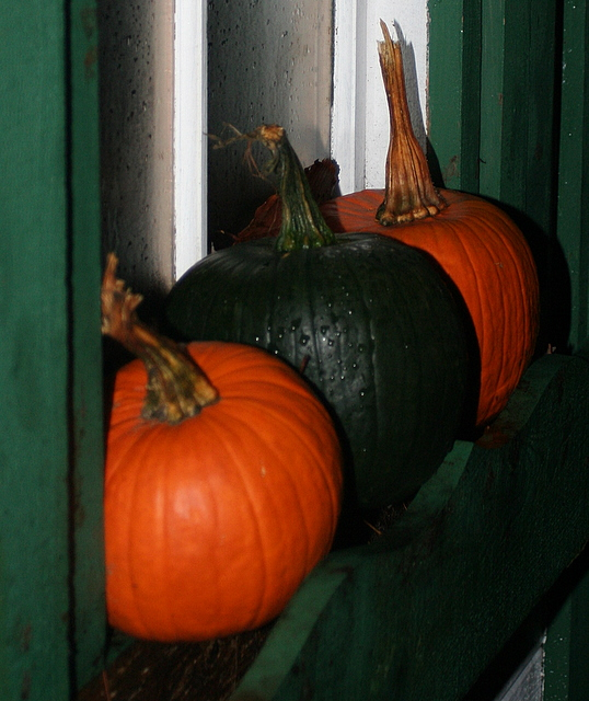 Pumpkins in the window box on my shed...