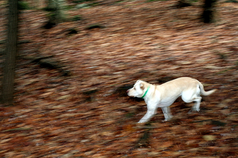 Riley romping through the woods...