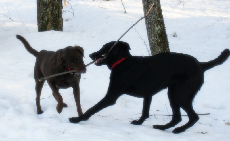 More tug-o-war between Sophie and Sherman...