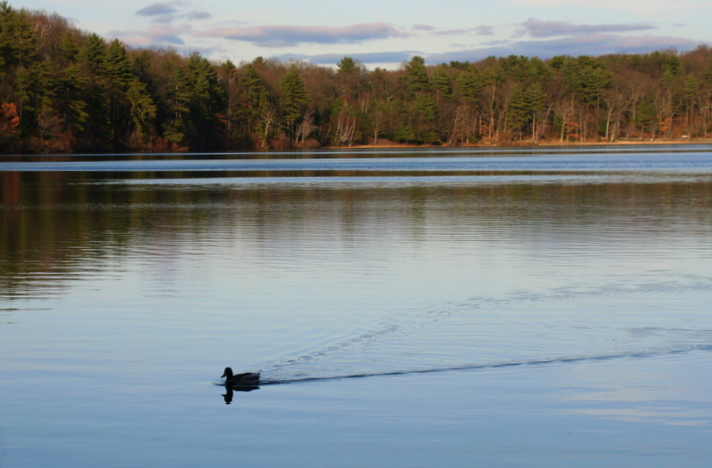 Cruising the water of Walden Pond...