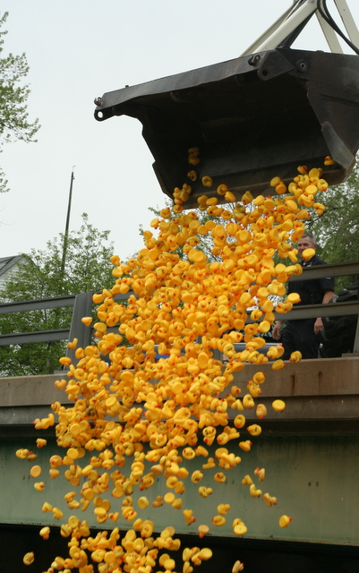 Rubber ducks being dumped into the river at the start of the Clifford Nyquist Duck Race in New Boston on Sunday