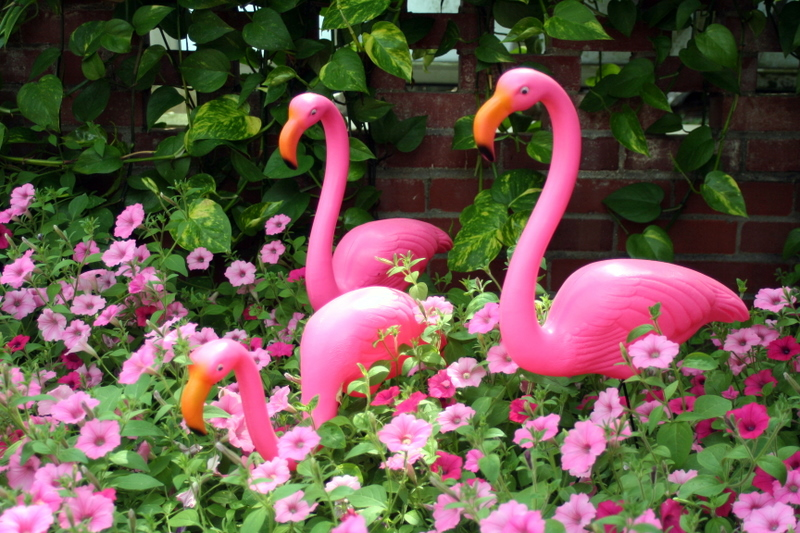 Pink flamingos and petunias at Phipps Conservatory in Pittsburgh
