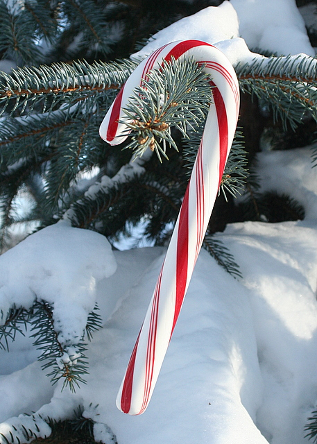 Candy Cane on a snowy tree...