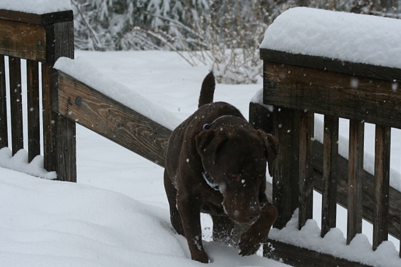 I think even Sophie is getting tired of trudging in the snow...