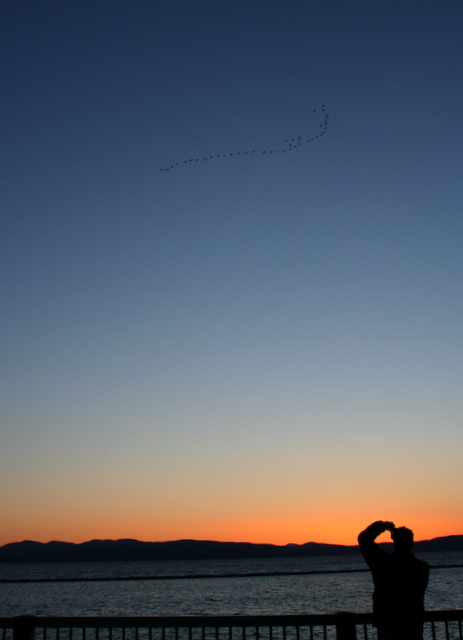The best shot I got of the birds at sunset over Lake Champlain was of Steve taking a picture of the birds...