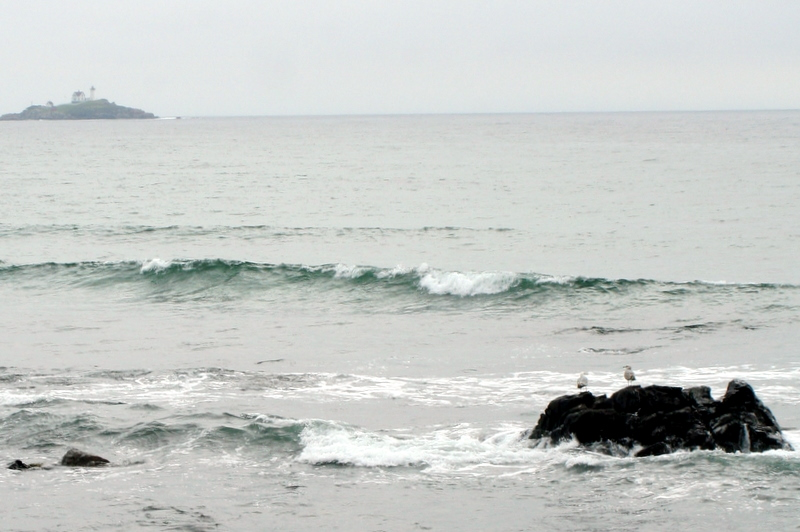 Long Sands Beach, ME seagulls looking toward Nubble Light on Saturday's overcast morning...