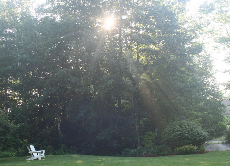 Sunbeams in my front yard...