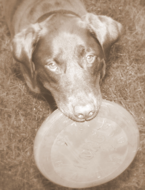 PLEASE play frisbee with me...