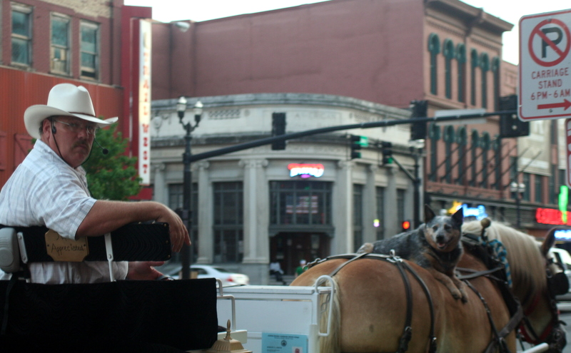 What y'all looking at?  Haven't you ever seen a dog on a horse?  Downtown Nashville...