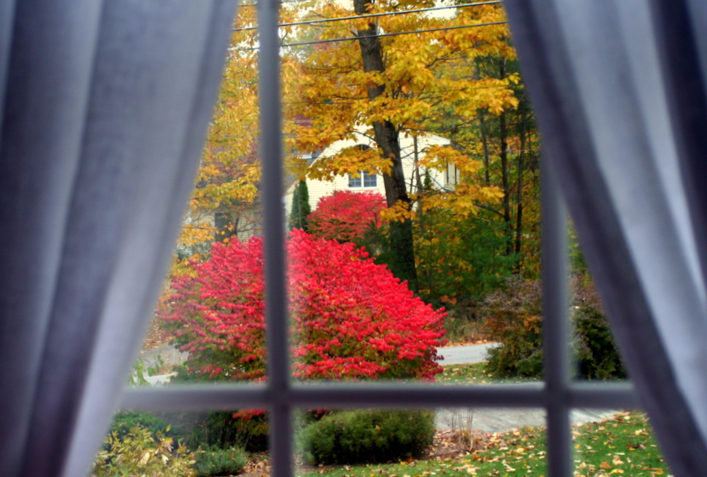 Looking out from the living room... loving the colors...