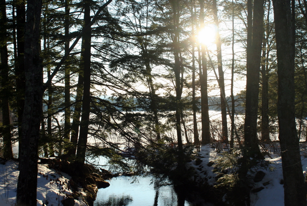 Yesterday's sun and a snow covered Scobie Pond