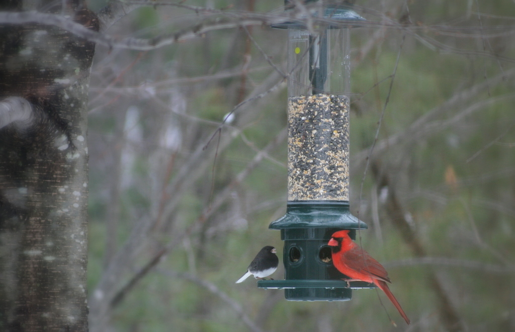 Lots of action at the bird feeder lately