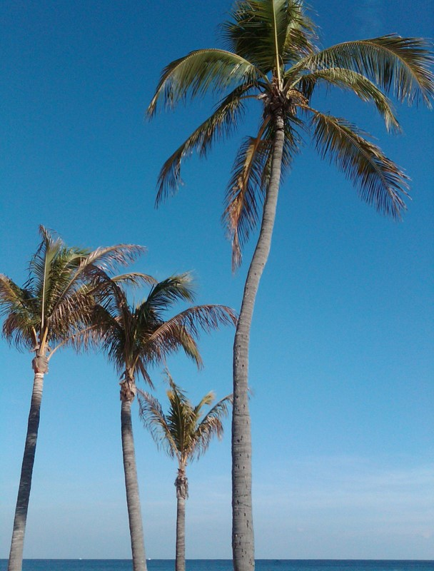 Another cool and breezy day in FL but at least the skies were nice and blue...