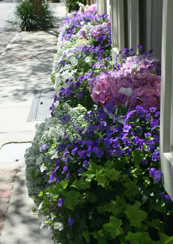 So ready for windowbox flowers like these beautiful ones I saw in Charleston