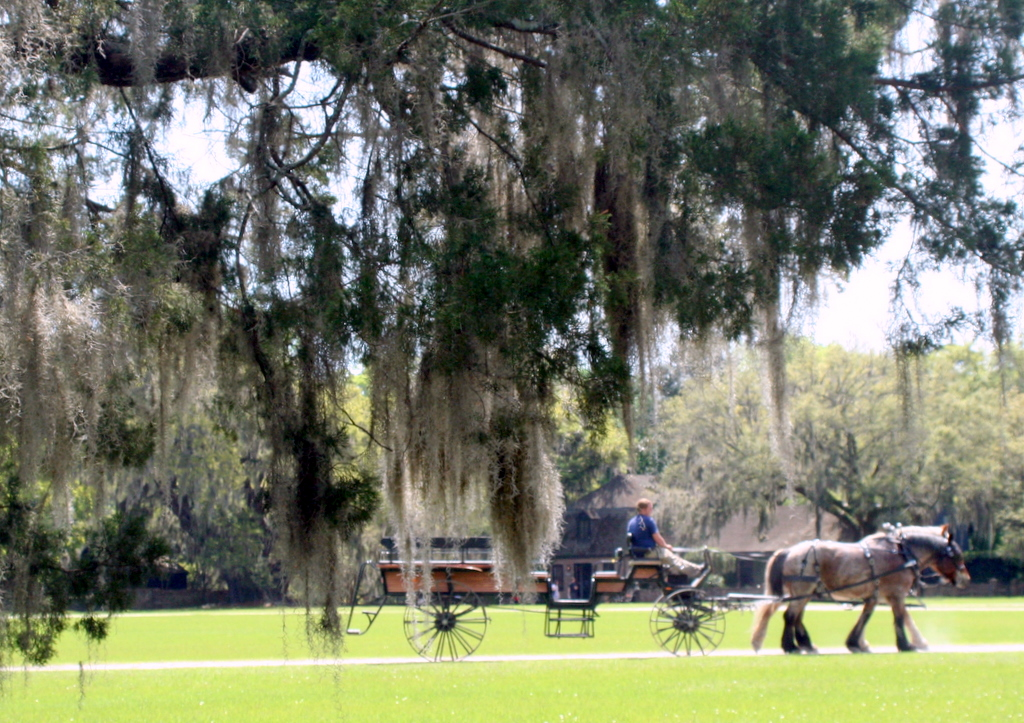 Middleton Place Plantation horse and carriage
