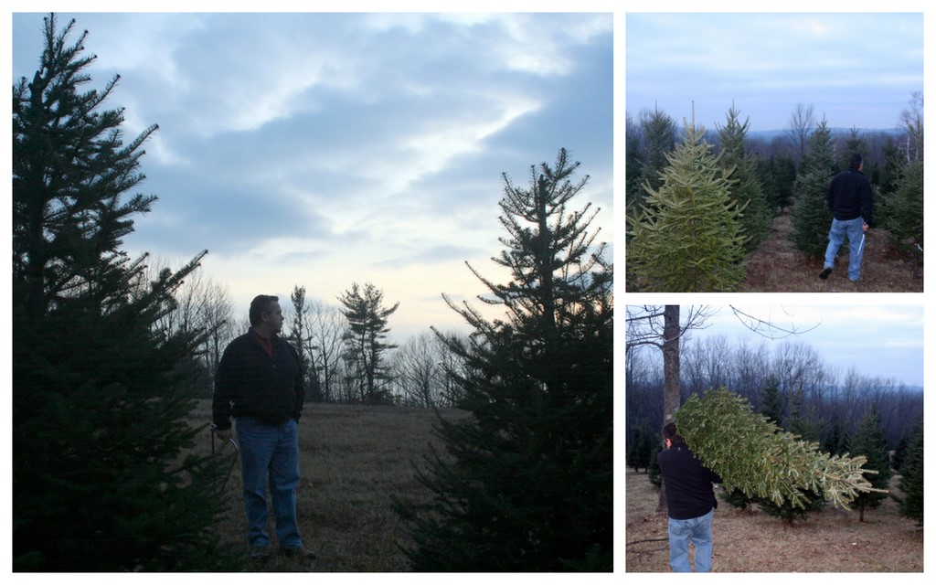 Cut down our tree yesterday :)