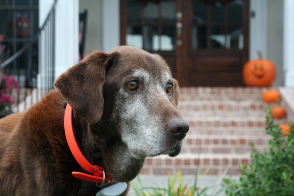 Thinking of my brother's dog Murphy who joined Benny & Casey Jones in doggie heaven yesterday.
