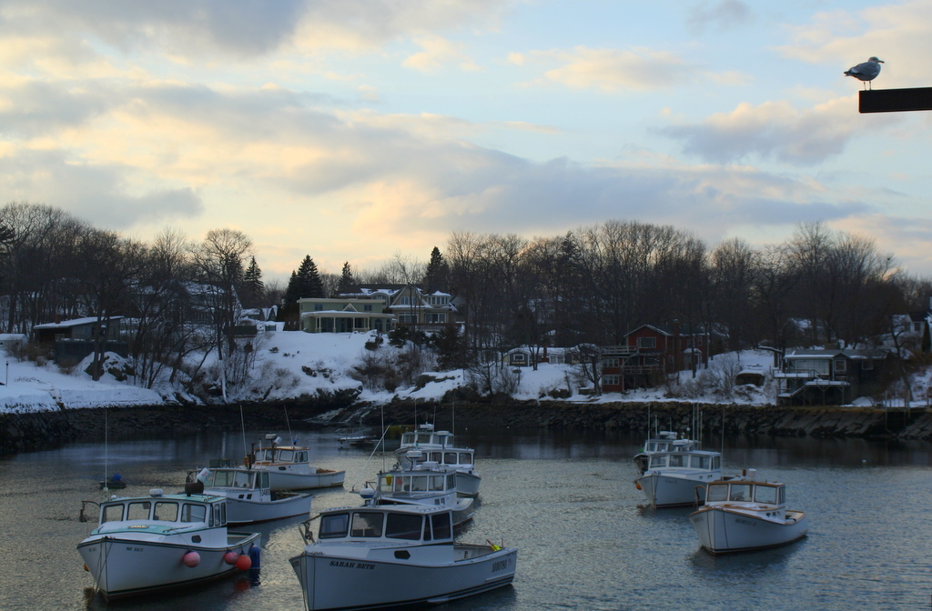 Perkins Cove and Seagull