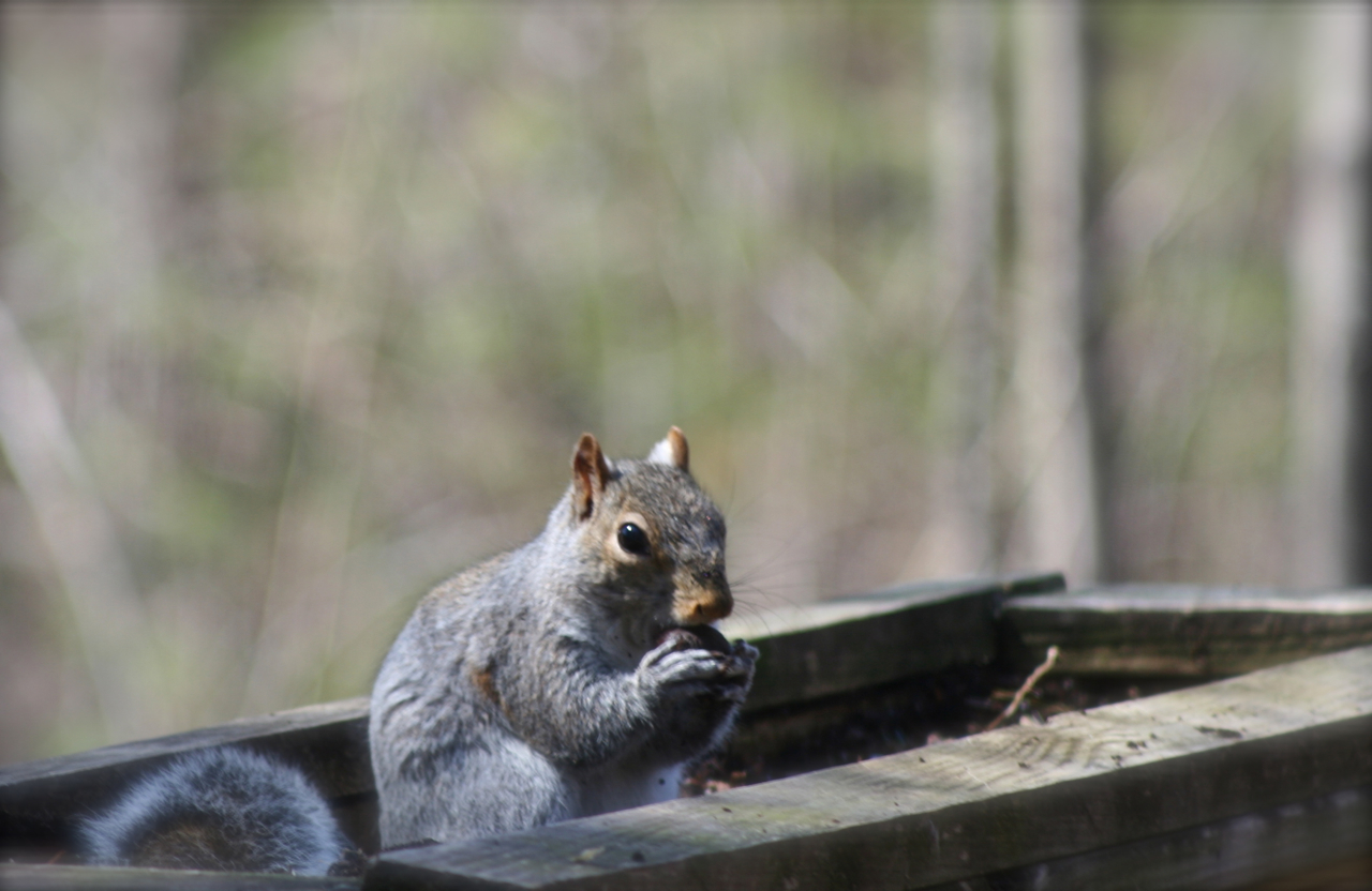 Apparently Mr. Squirrel stashed acorns in the flower box...