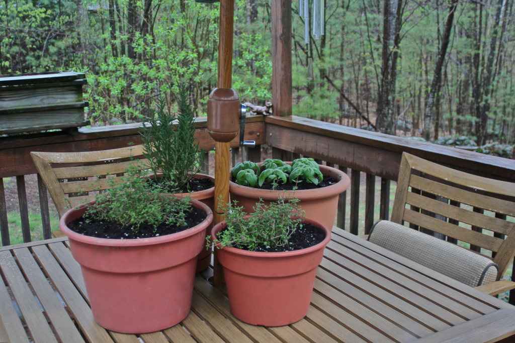 Planted a few of our herbs last weekend...maybe some more this weekend :)