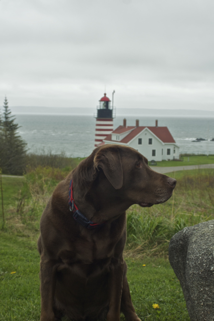 Sophie at West Quoddy Head Lighthouse, Lubec Maine - the easternmost point in the US