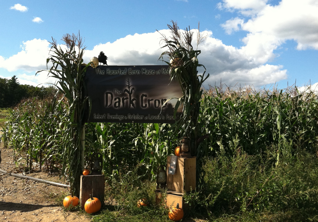 The haunted corn maze looks innocent enough with the deep blue sky but I bet it\'s a different story at night