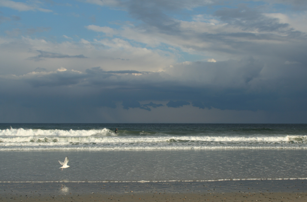 Love all the nature going on - the sky, the waves, the seagull... and the surfer