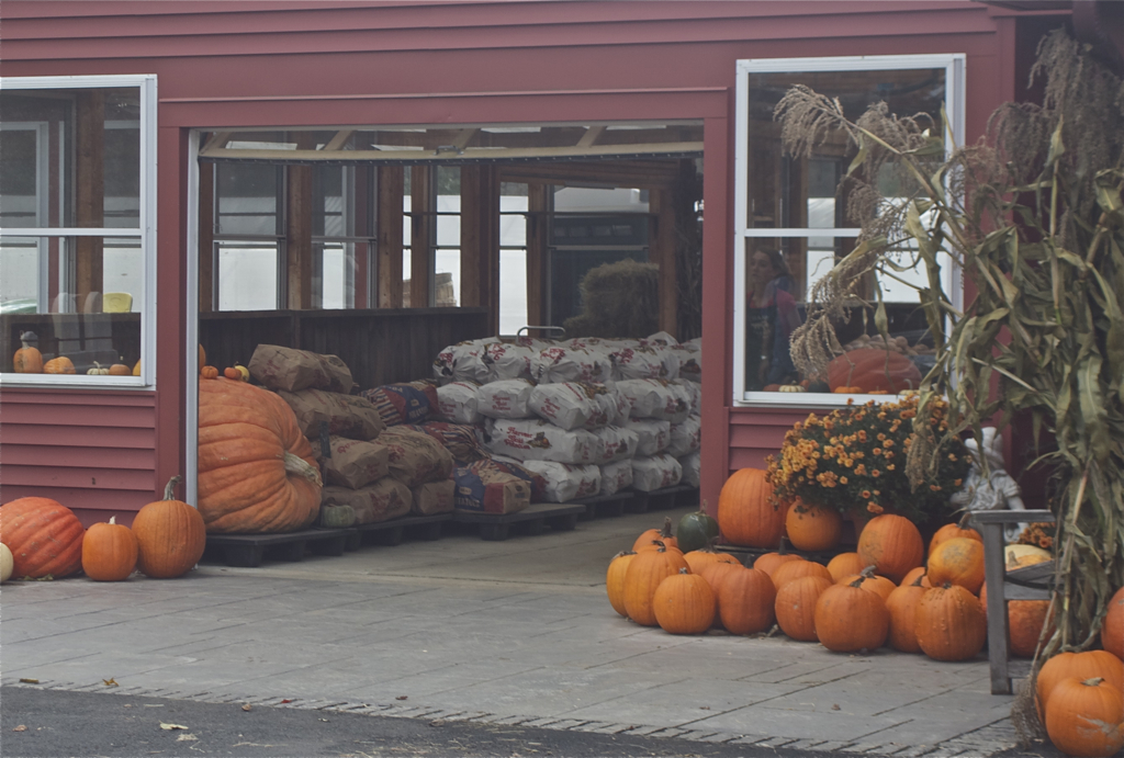 Nothing says fall like pumpkins and giant bags of potatoes