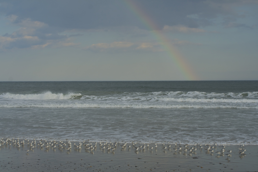 Plovers and a rainbow