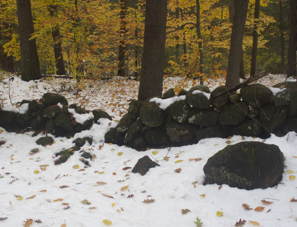 The snow is actually a really pretty backdrop for the autumn leaves...