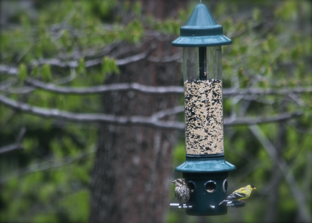 The spring birds have been chowing down the seed... Have to keep filling the feeder every few days!