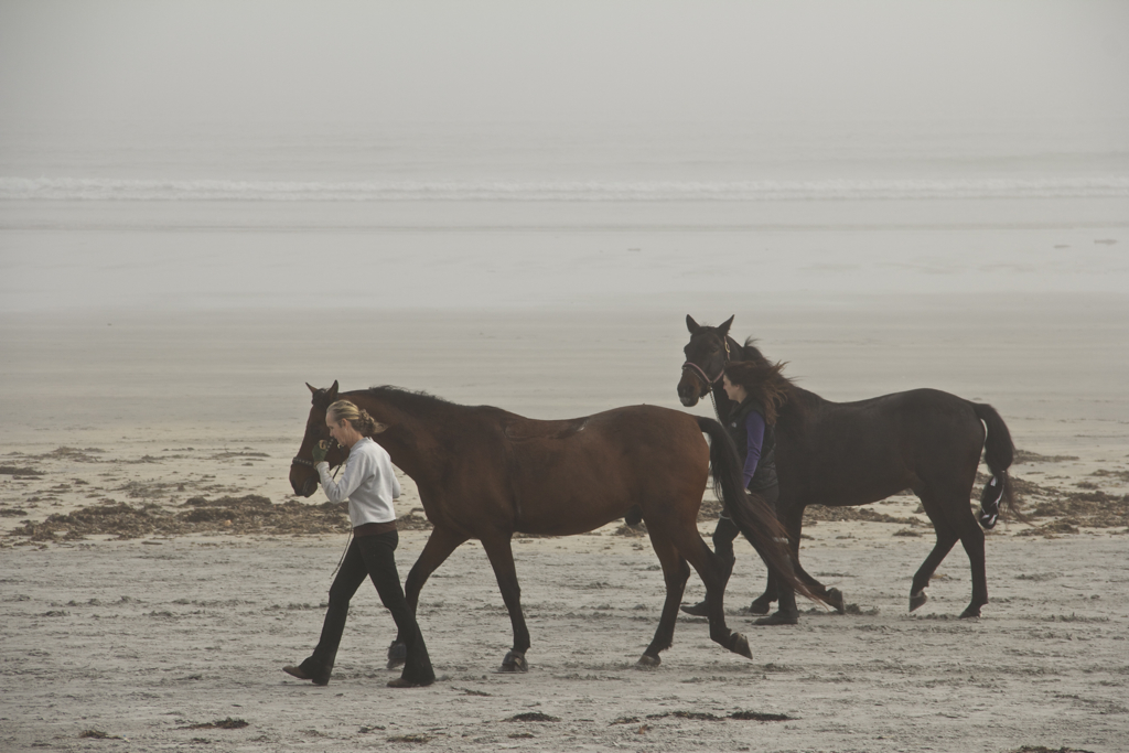 Wasn't expecting to see horses on Long Sands Beach today...