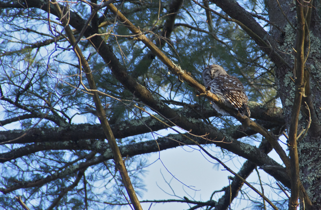Happy to have found where this owl landed after spotting it in flight during our hike yesterday.