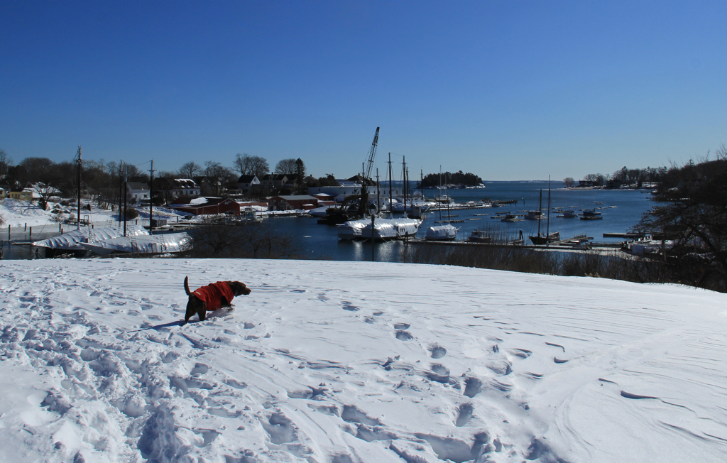 This is a little more along the lines of freedom in the snow that Soph prefers...not to mention a harbor view