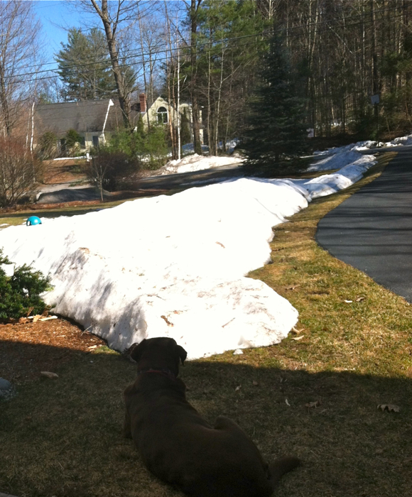 Soph says snow piles be damned too - she's soaking up the sun regardless