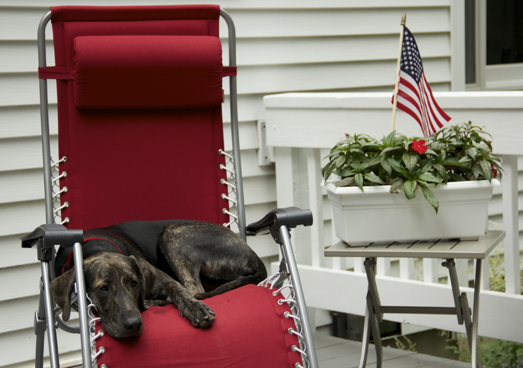 My friend's dog Laverne making herself at home on the deck