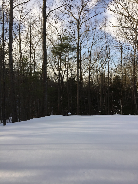 Untouched backyard snow...