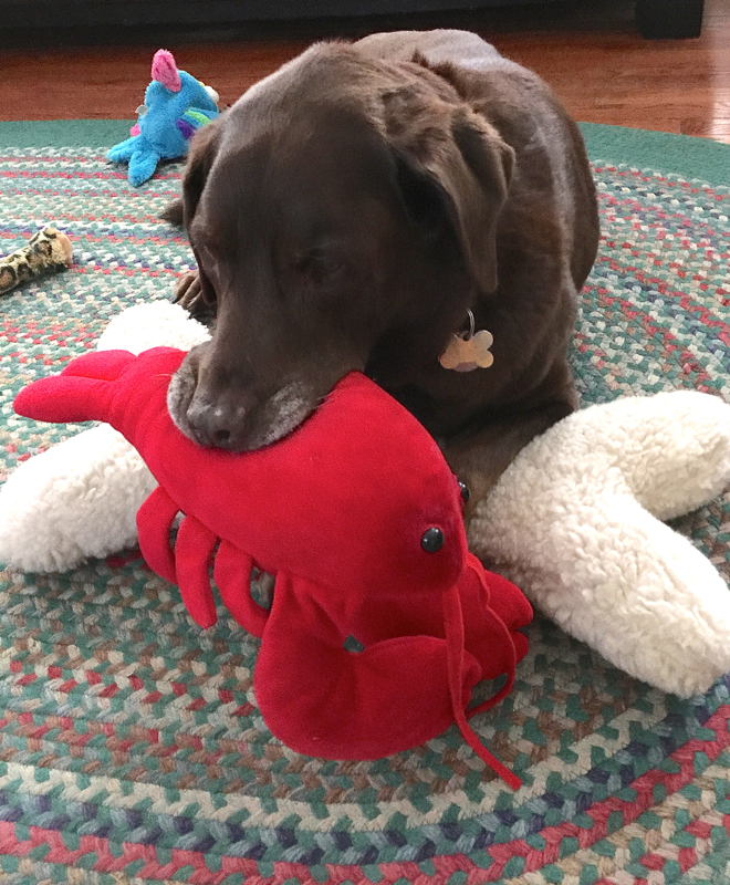 Soph reclaiming her lobster toy...
