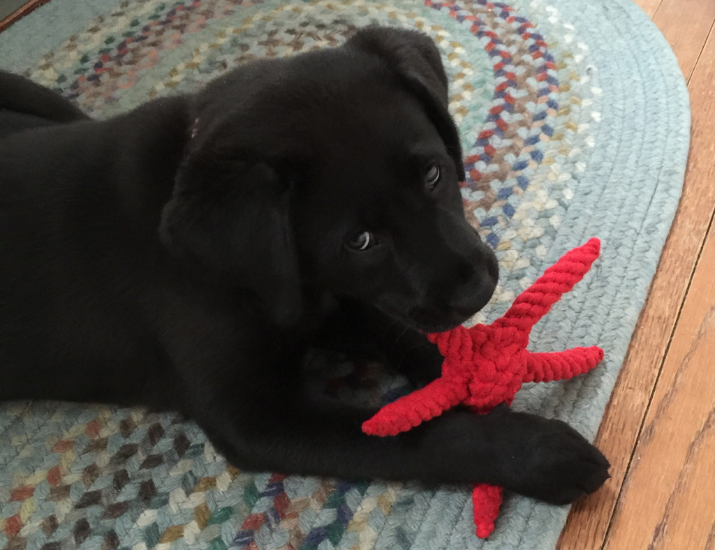 Enjoying the starfish rope toy