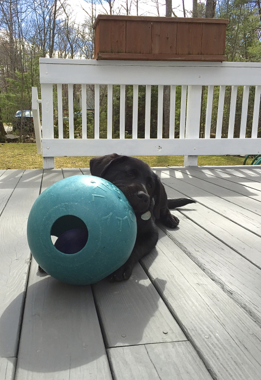 Doesn't matter that the jollyball is bigger than her head...