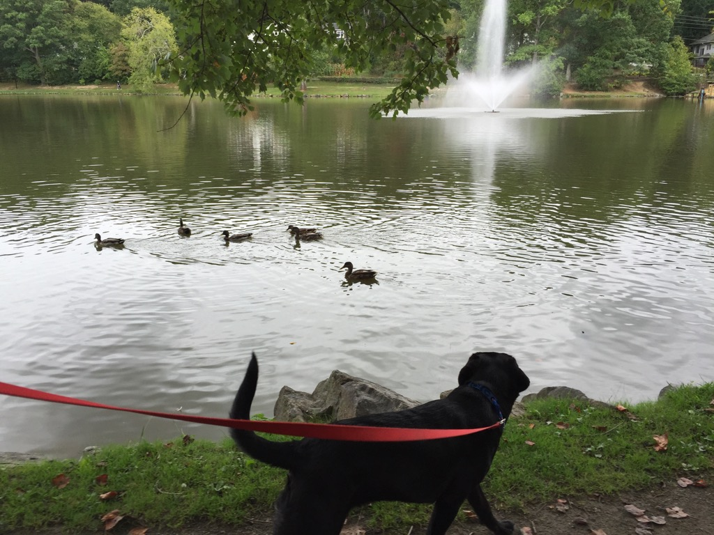 Someone was a little interested in the ducks...