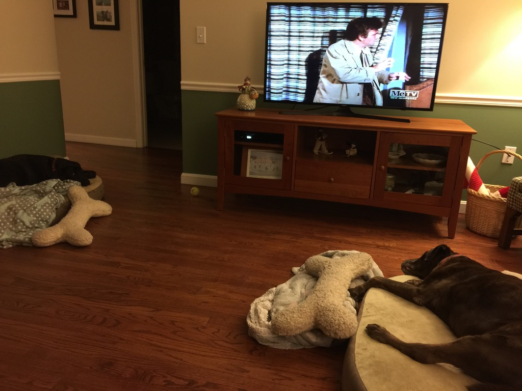 The dogs don't seem as entertained by Columbo as we are...